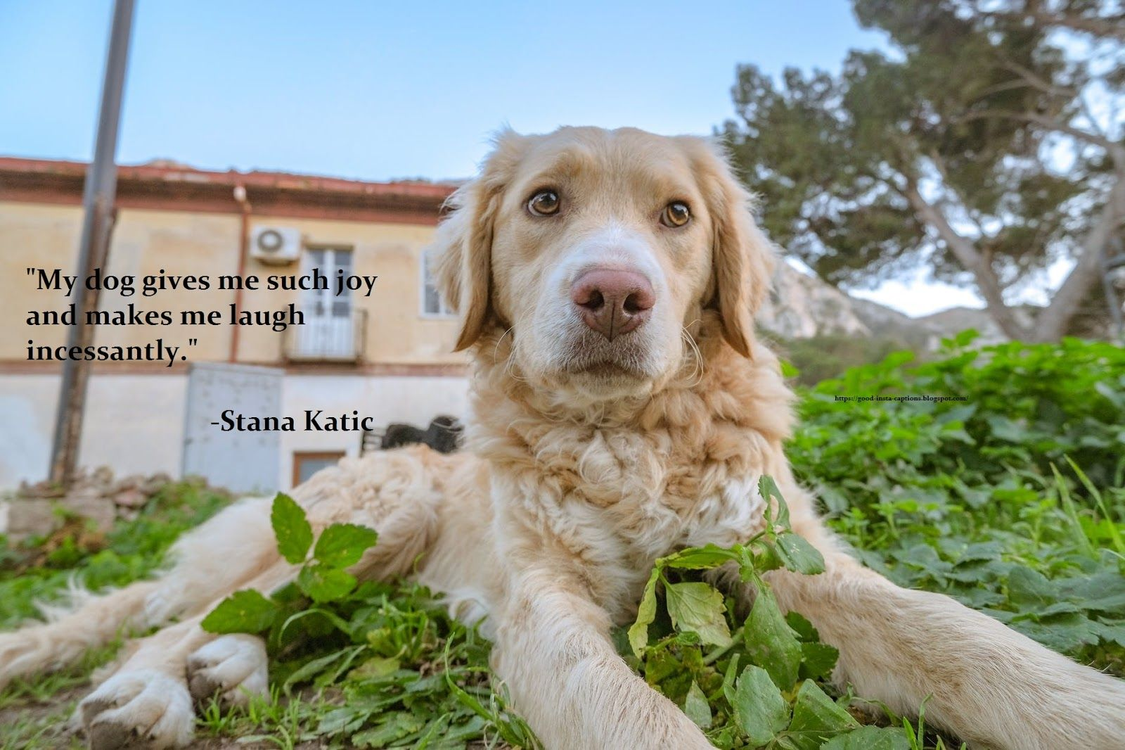 Funny Dog Quotes By Stana Katic Golden Retriever Beautiful Dogs Photos Dog Quotes Funny