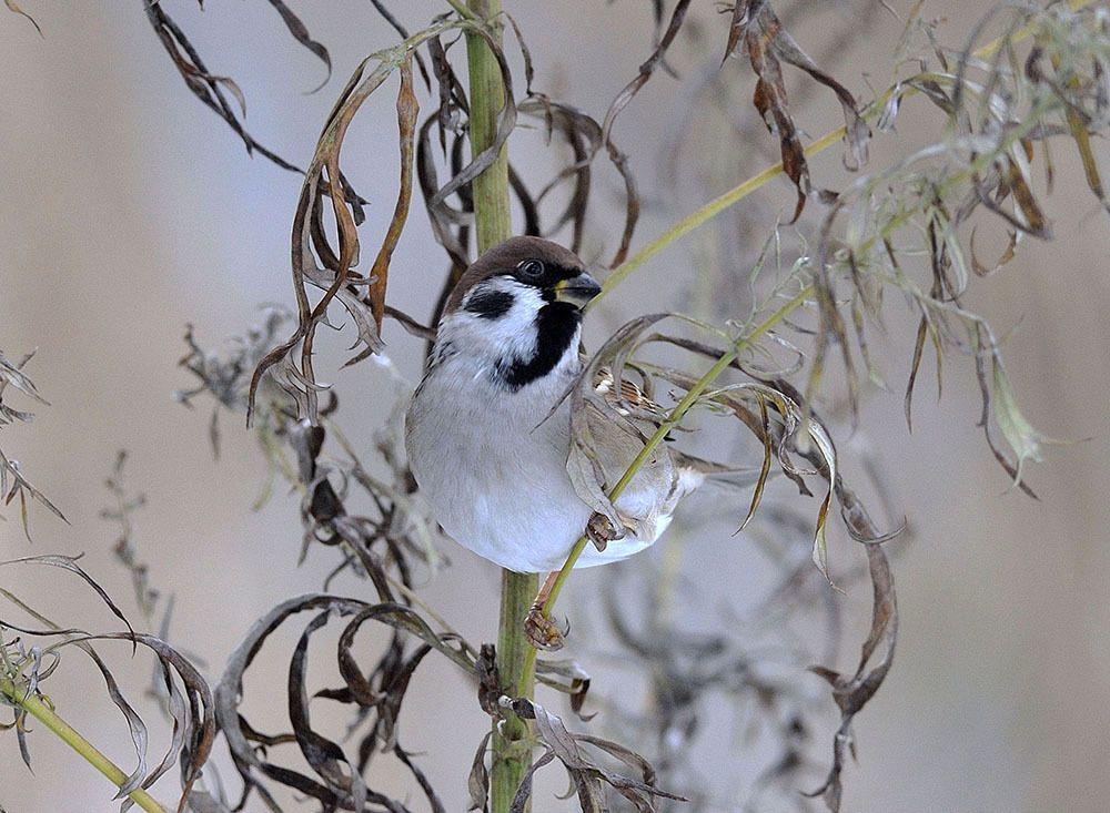 العصافير الصورة Vorlieben