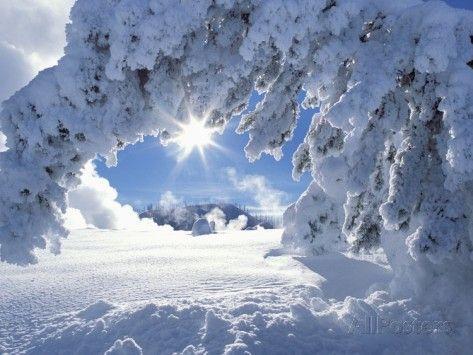 Snowy Landscape in Yellowstone Fotografisk trykk