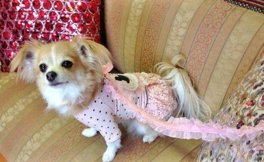 Mimi From Australia In Pink 3 Designer Dog Clothes Dog Design