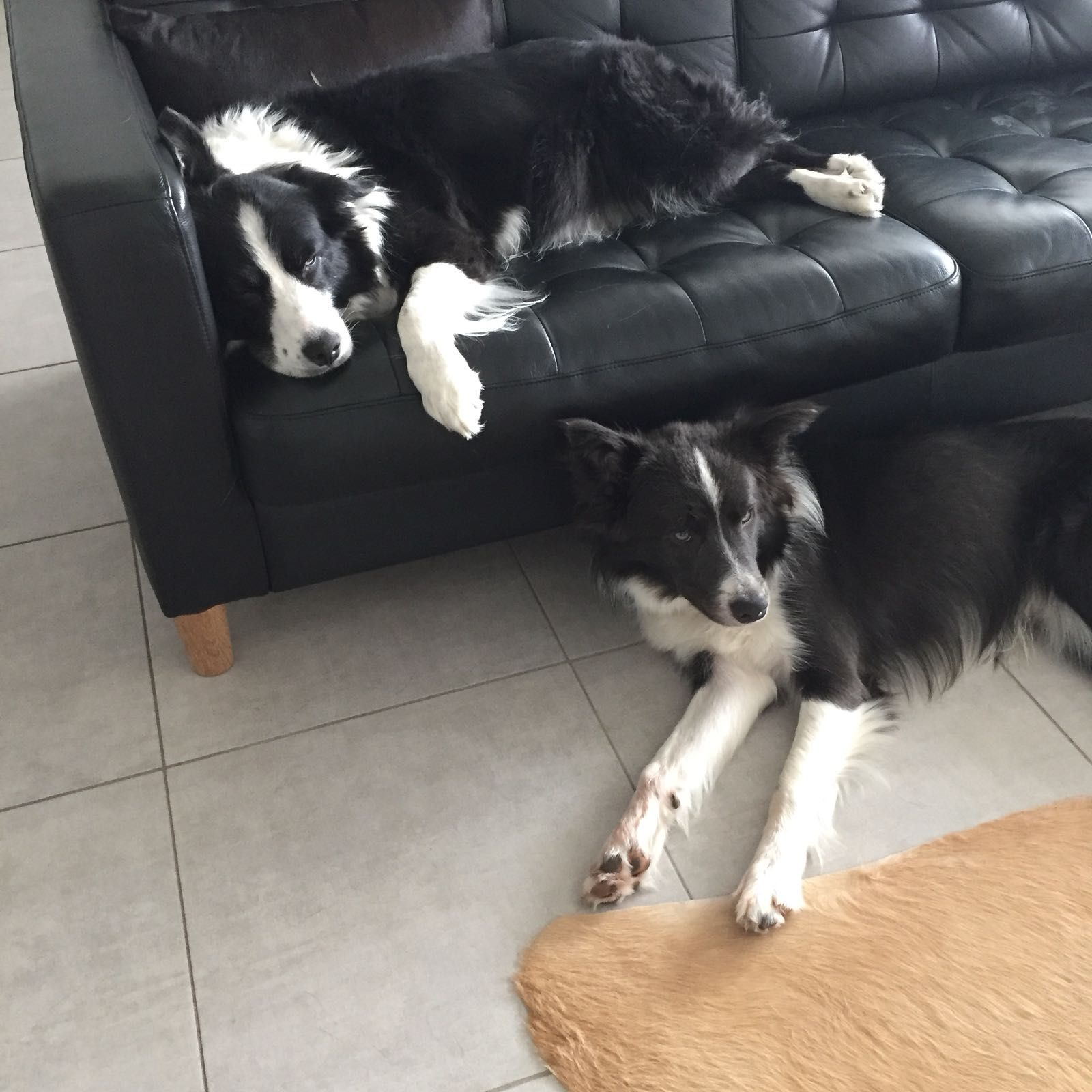 Pin By Melanie Hansen Belleman On Dogs Mostly Border Collies Border Collie Puppies Border Collie Collie