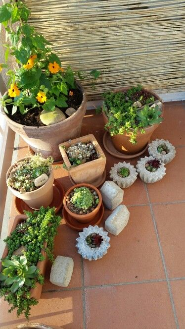 Mini Steingarten in diy betontöpfen beton Pinterest