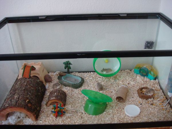 Hedendaags Pin by PanicOnA Thursday on Hamsters | Dwarf hamster cages PY-32