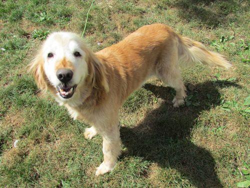 Adopt Chessa On Dog Bath Dogs Golden Retriever Animal Rescue