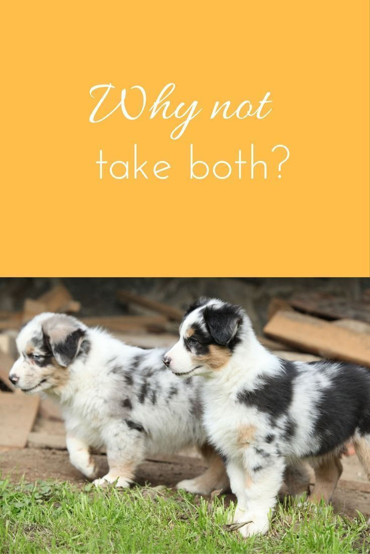 Thinking About Getting 2 Pups At Once To Keep Each Other Company