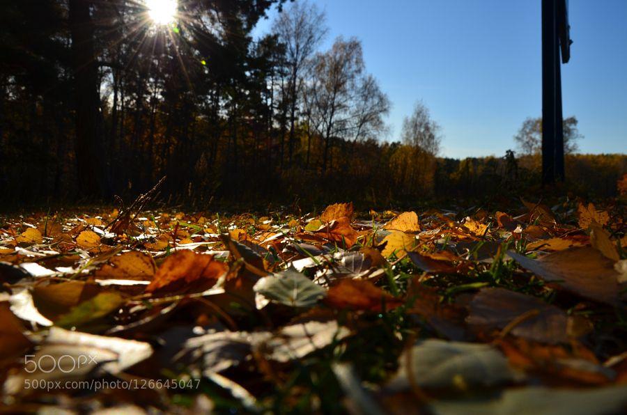 Golden Autumn by VanHalen #nature