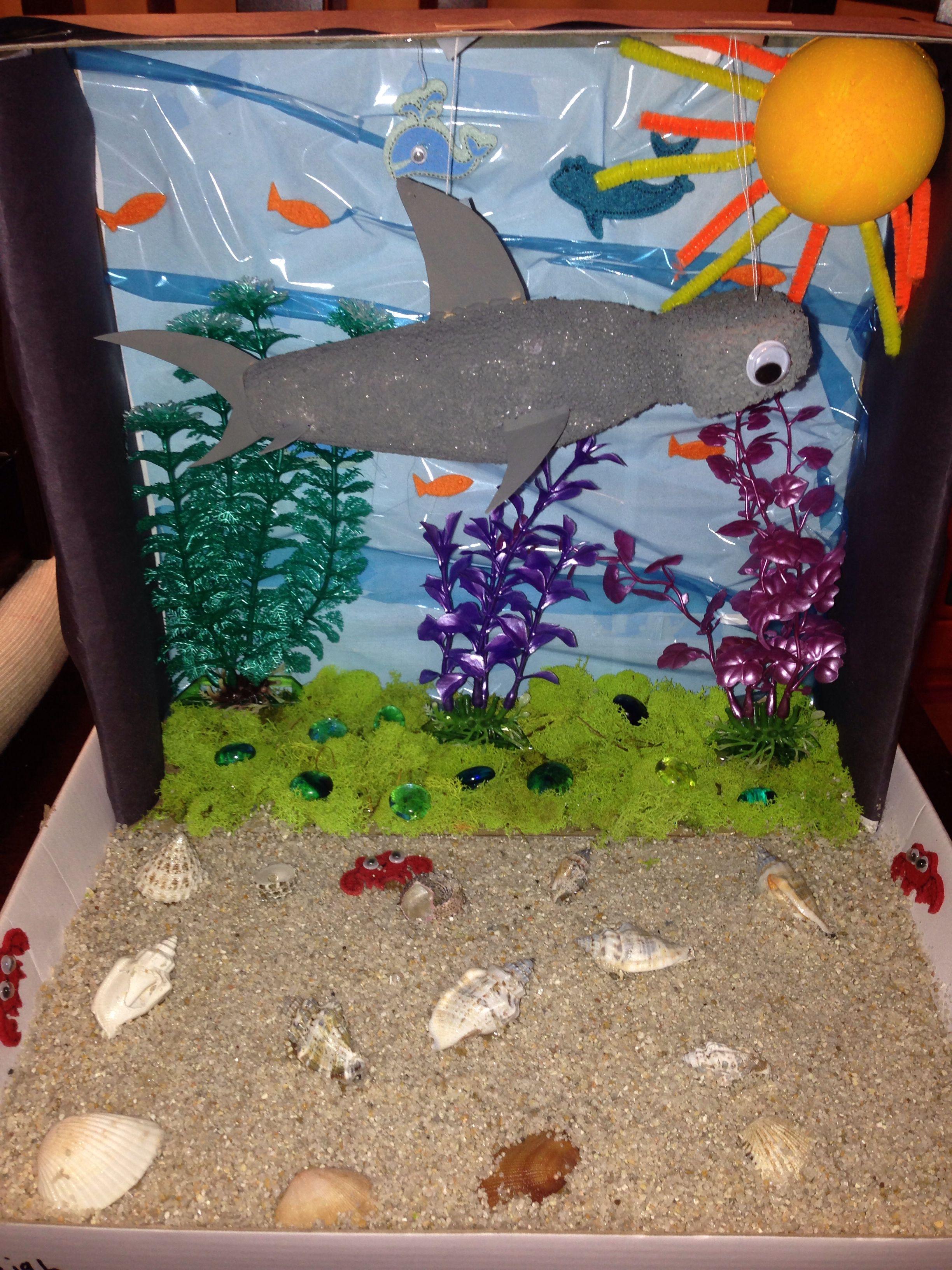 Hammerhead Shark 1st Grade Project