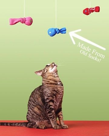 DIY Cat Toys @♥ Dorothy Corrigan ♥ ~ Tingting might like one of these.