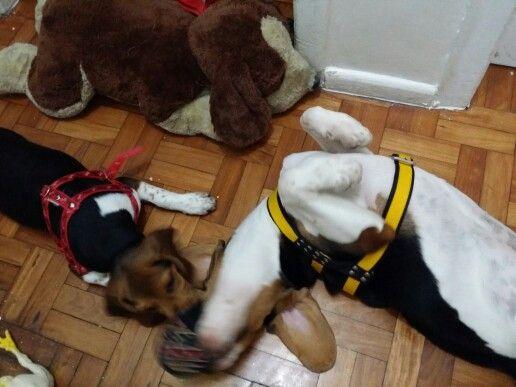 Brigando por um brinquedo