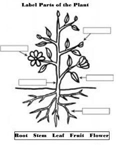 label parts of a plant worksheet kindergarten - Google Search ...