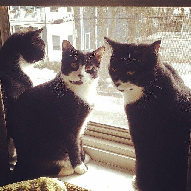 From Good Housekeeping: The Cutest Animal Siblings on Instagram