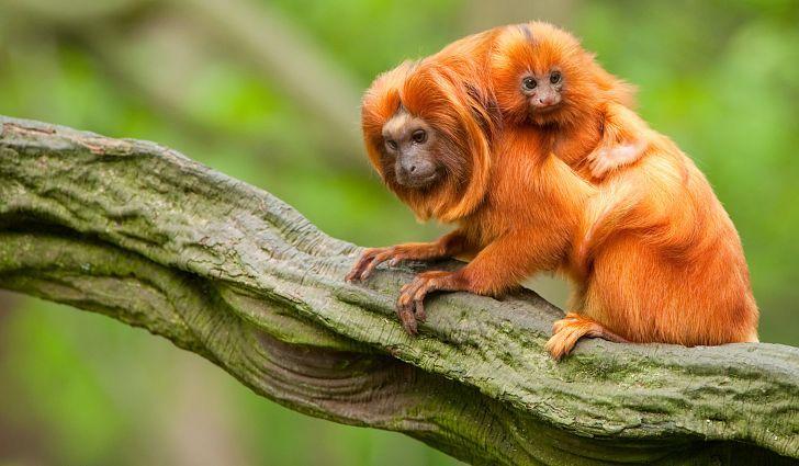 What Animals Live In The Amazon Rainforest Rainforest Animals