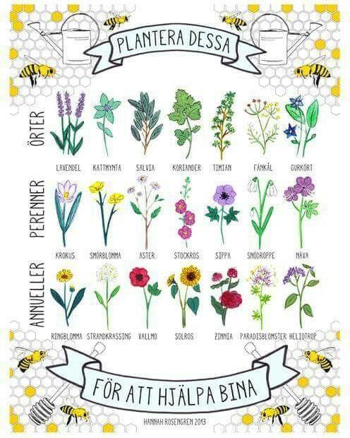 blommor för bin