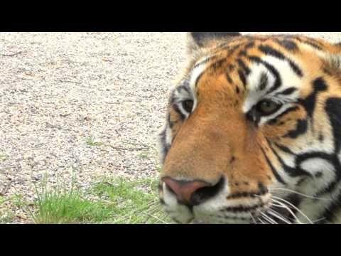 Wild Animal park Animals wild, Wild animal park, Animals