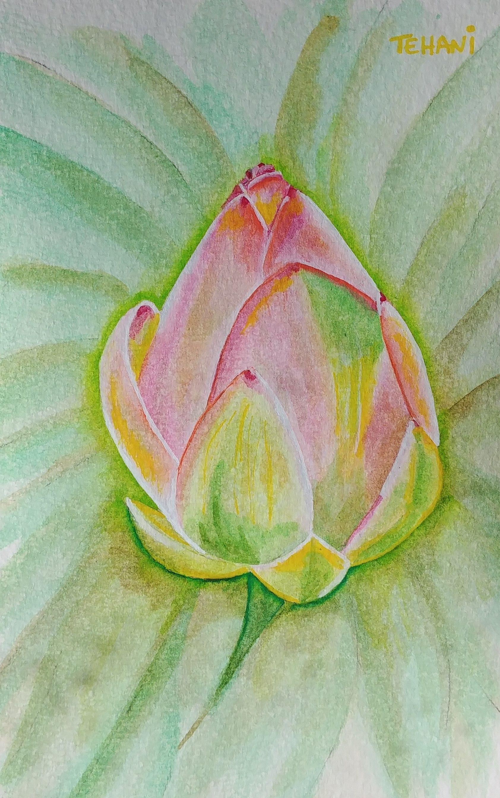 Bouton Lotus Peinture Et Aquarelle