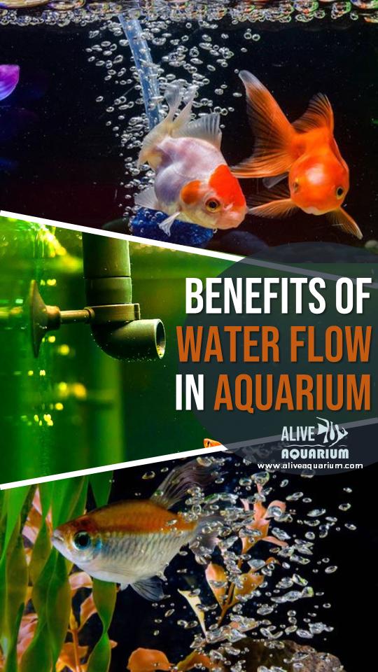 Benefits Of Aquarium Water Movement Aquarium Water Flow Water Movement
