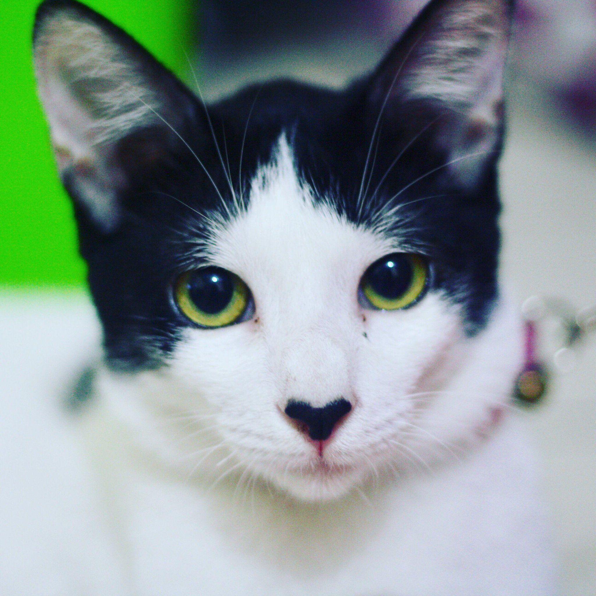 Awwwww On Cat Love Cat Nose Cat Selfie