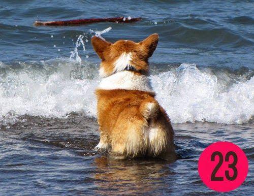 2015 Corgi Butts Calendar Winners Corgi Corgi Dog