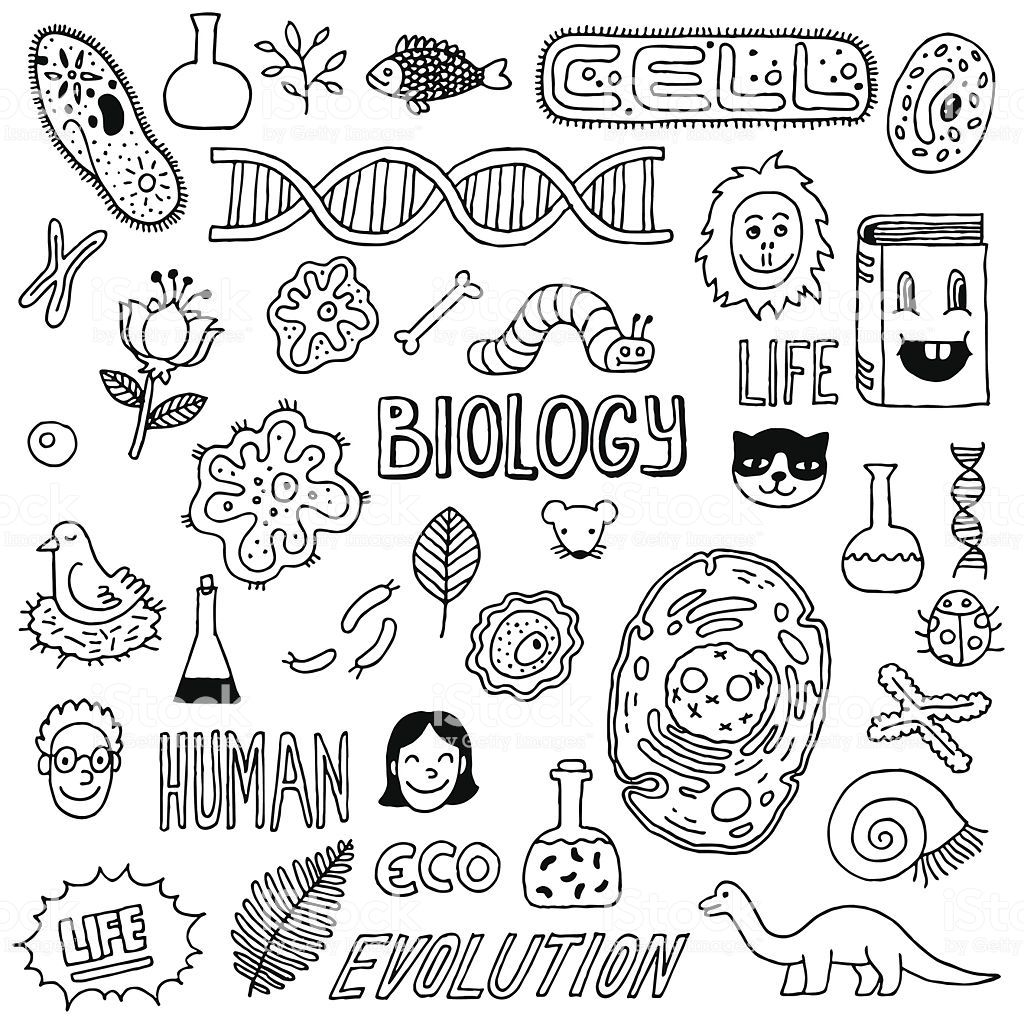 Hand Drawn Biology Inspired Images The Background Is