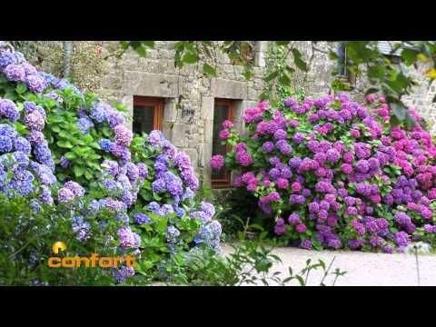 El Jardinero En Casa Hortensias Youtube Flores