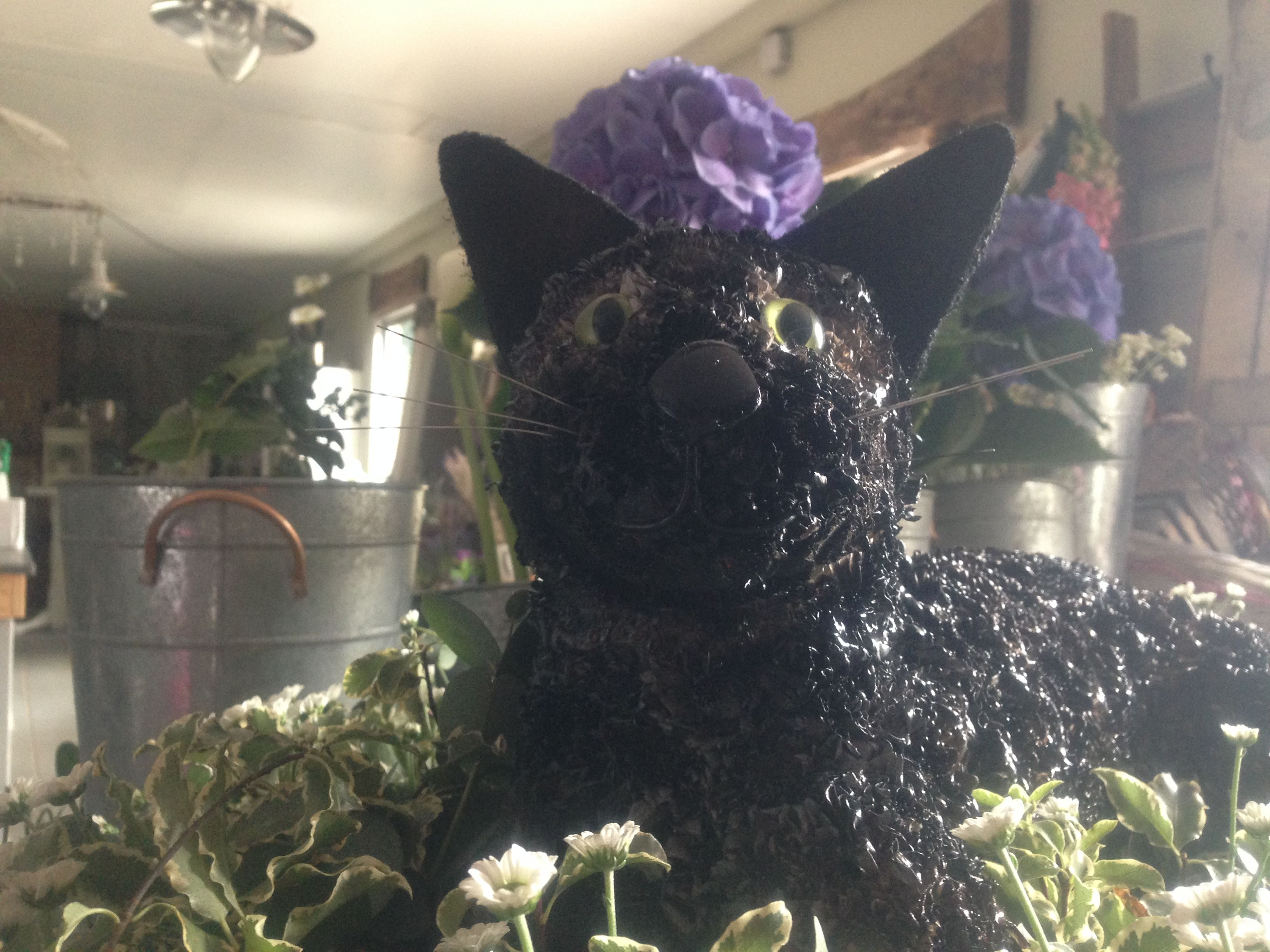 Funeral Flowers Tabby Cat Funeral Flower Tribute 3d Cat Funeral