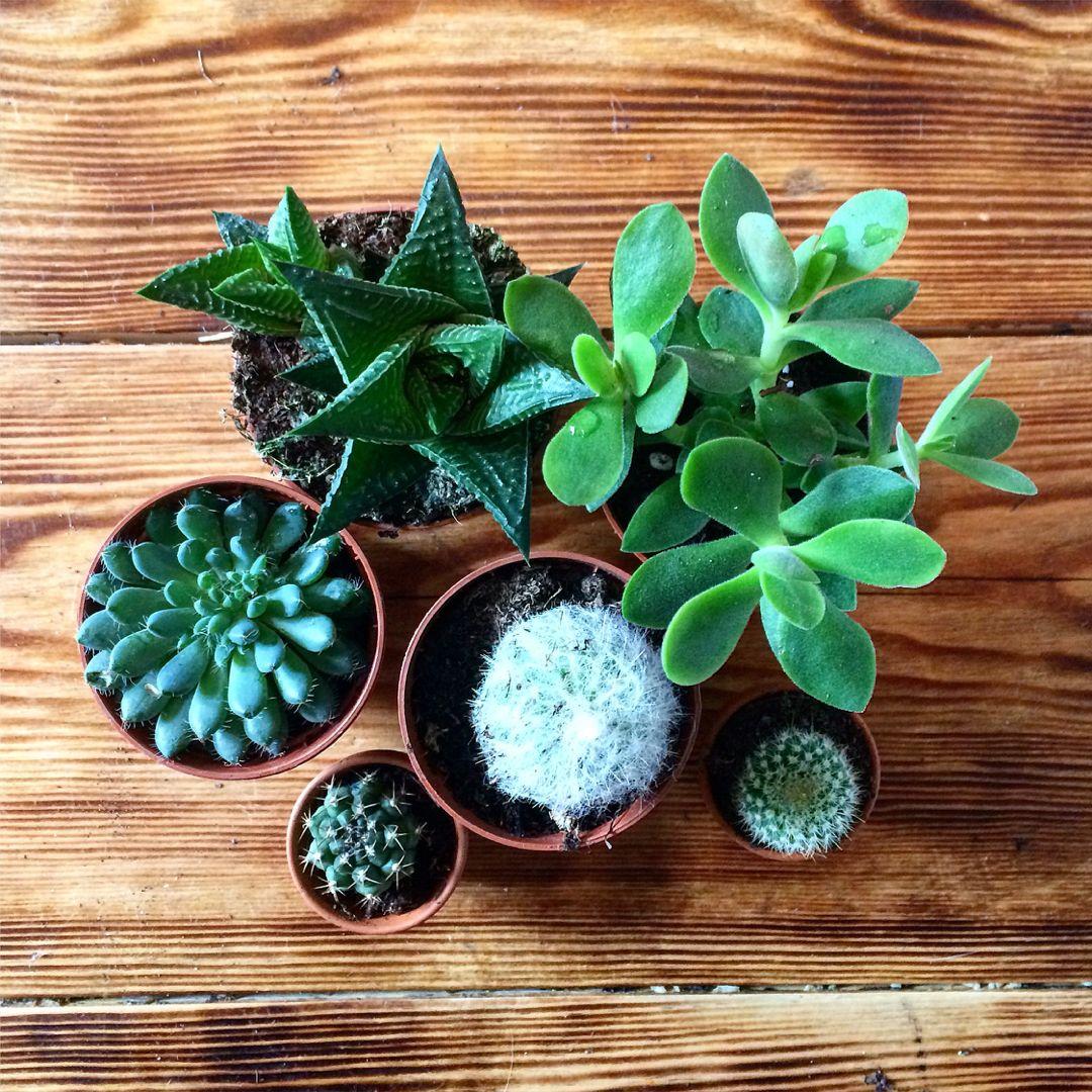 Succulents cacti and lush foliage terrarium planting kits available