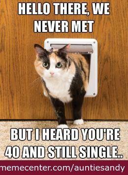 ed583d4fdf8c0d29975b71b4501b2f98 cat lady funny similar galleries funny fat cat memes , funny
