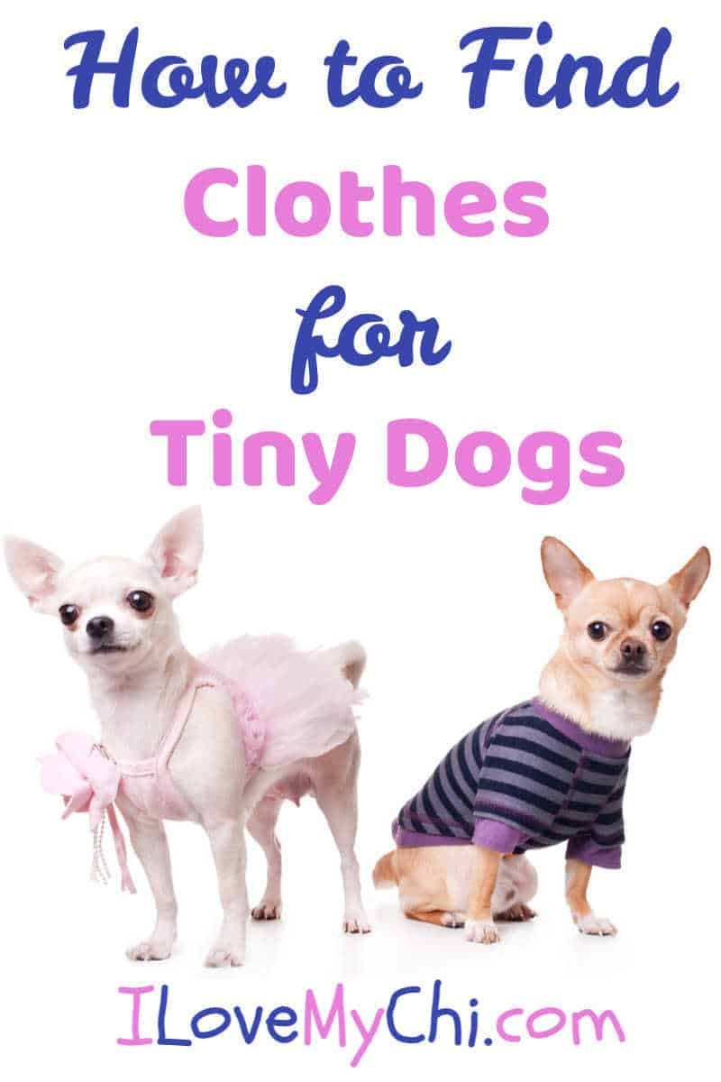 How To Find Clothes For Tiny Dogs Dog Accesories Chihuahua