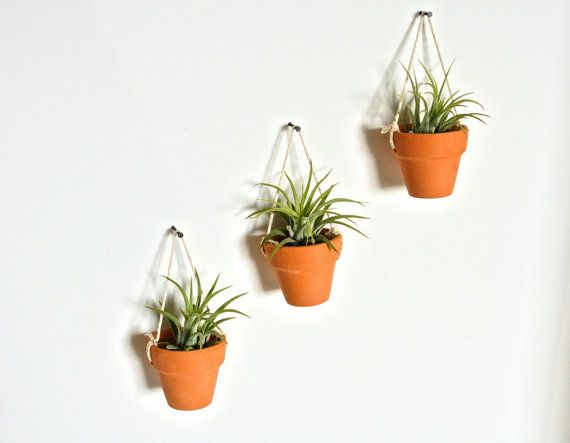 Three Mini Hanging Ceramic Pots With Air Plants Pottery Hanging