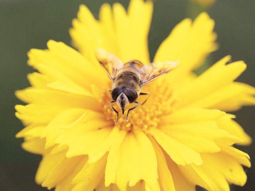 La flor que florece en la adversidad es la más rara y...