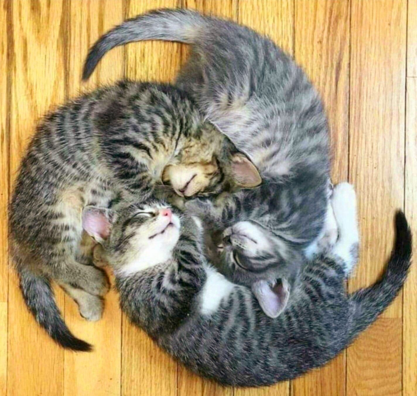 Pin by Martha Adams on cats♡ Funny cute cats, Cats and