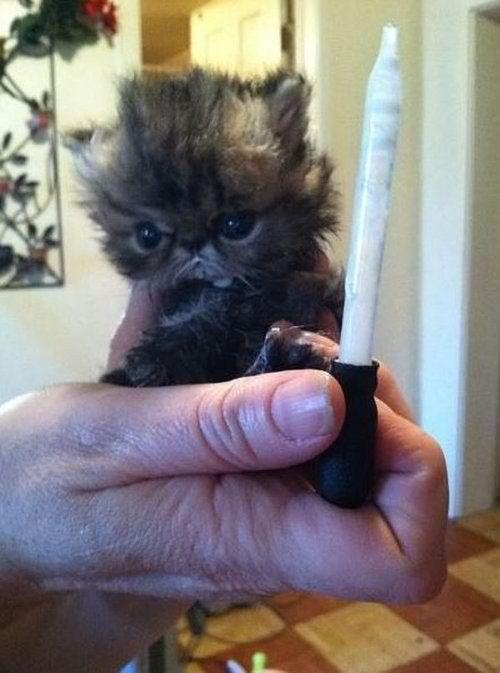 Cute Sad Baby Animals