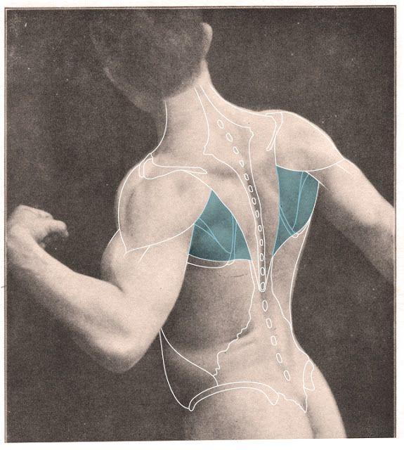 En esta imagen, sólo la ventana músculo se ha dado una superposición ...
