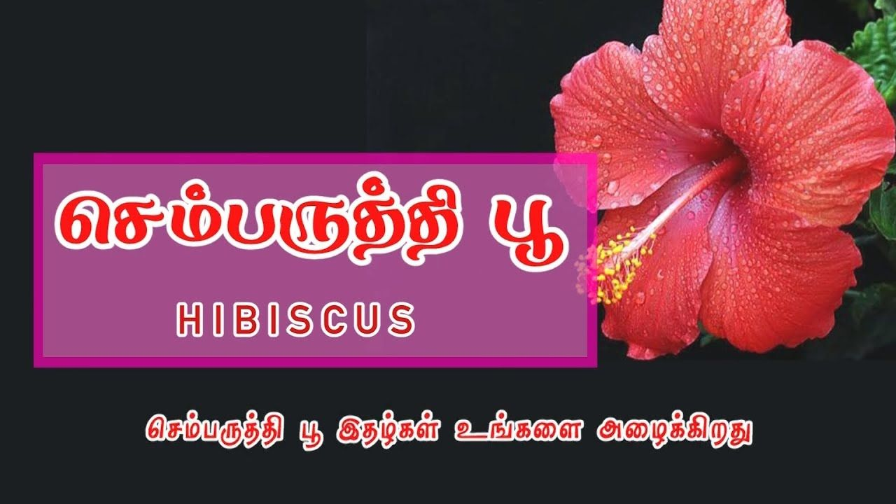 இயற க தங கபஸ பம ச ம பர த த Hibiscus Coconut Health Benefits Italian Buffet Cooking Recipes