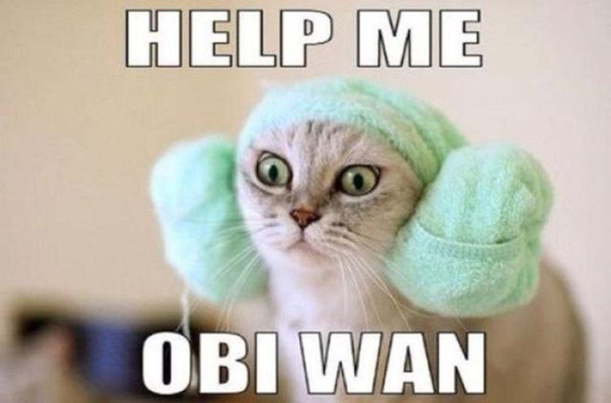 It S Caturday Help Me Obi Wan Kenobi You Re My Only Hope Help Me Obi Wan Star Wars Memes Crazy Cats