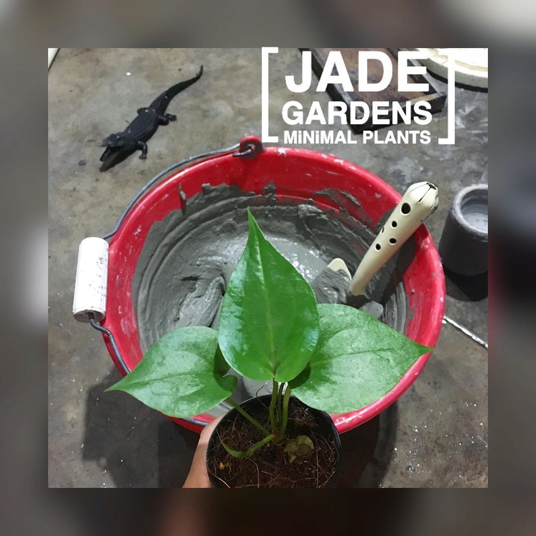 [ J A D E 🌿 G A R D E N S ] 🌱🌱  Jade HIPPIE INDIE LIFE 🌿 Believe in things Trivia about what you believe.