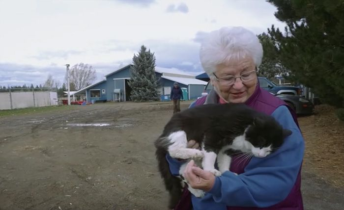 Shelters Finds Jobs For Unadoptable Cats To Keep Them Alive Cats Stray Cat Cat Shelter