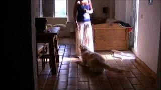 Reinforcing Maxi for staying calm and quiet whilst another dog is outside playing with a ball Claudia Estanislau - YouTube