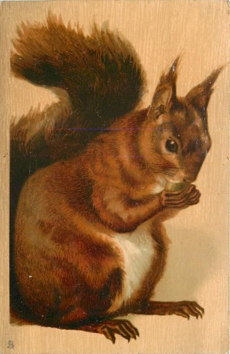 brown squirrel, sitting eating, facing right
