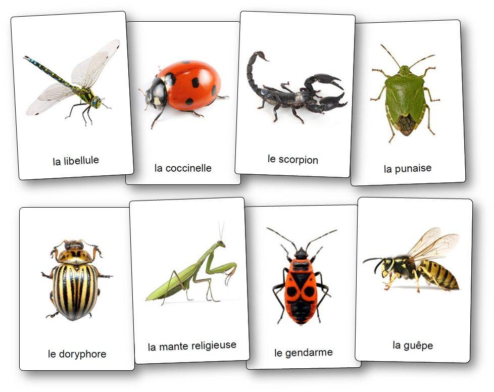 L 39 imagier des insectes et petites b tes du jardin - Insectes nuisibles du jardin ...