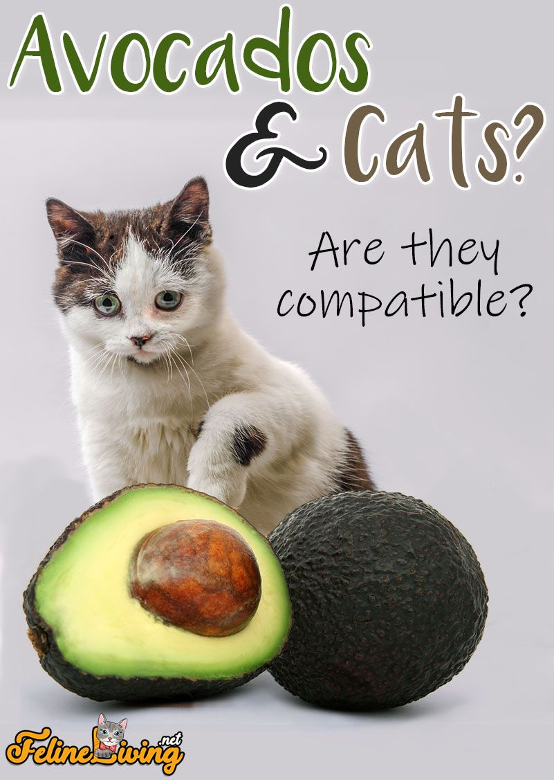 in 2020 What cats can eat, Cat health