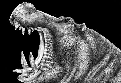 Hippopotamus Pen Ink On Paper 11x17 Ink Drawing Pencil
