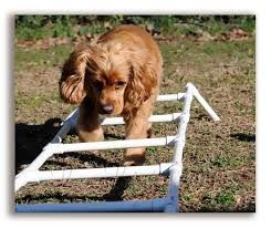 Image result for dog agility training equipment images