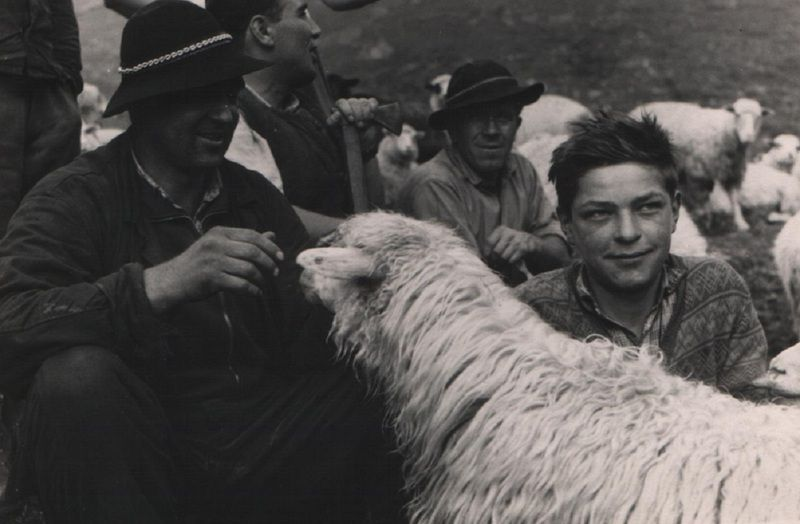 Pastierska idilka pod Klinom - fotoarchív:Miroslav Račko st. - 60 - te roky