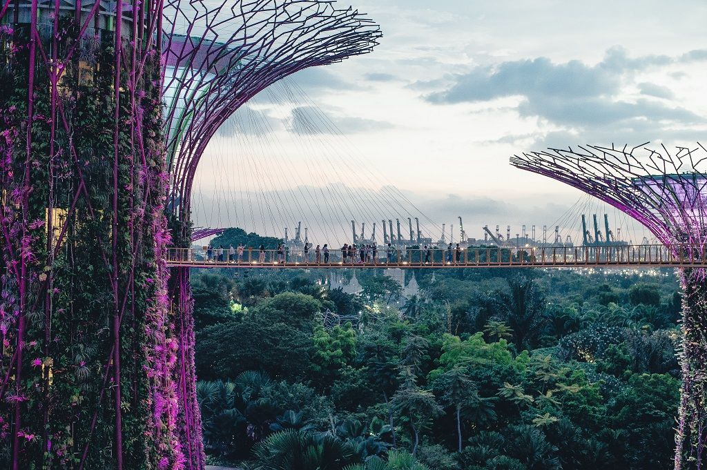 Singapore Supertree grove