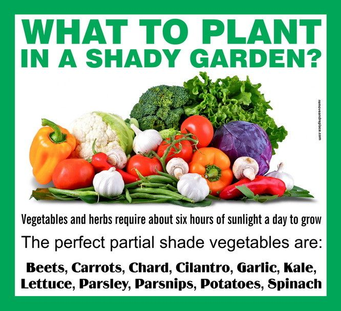 gardens vegetable garden ideas for shade - Vegetable Garden Ideas For Shaded Areas