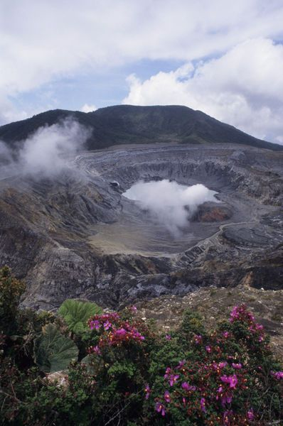 Costa Rica Steam Rising Out Of Active Crater In Poas Volcano Caldera Escolonia Flowers Melastoma Taceae