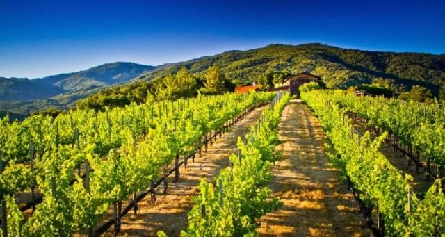 Carmel Valley: Ultimate Wine Connoisseur Experience