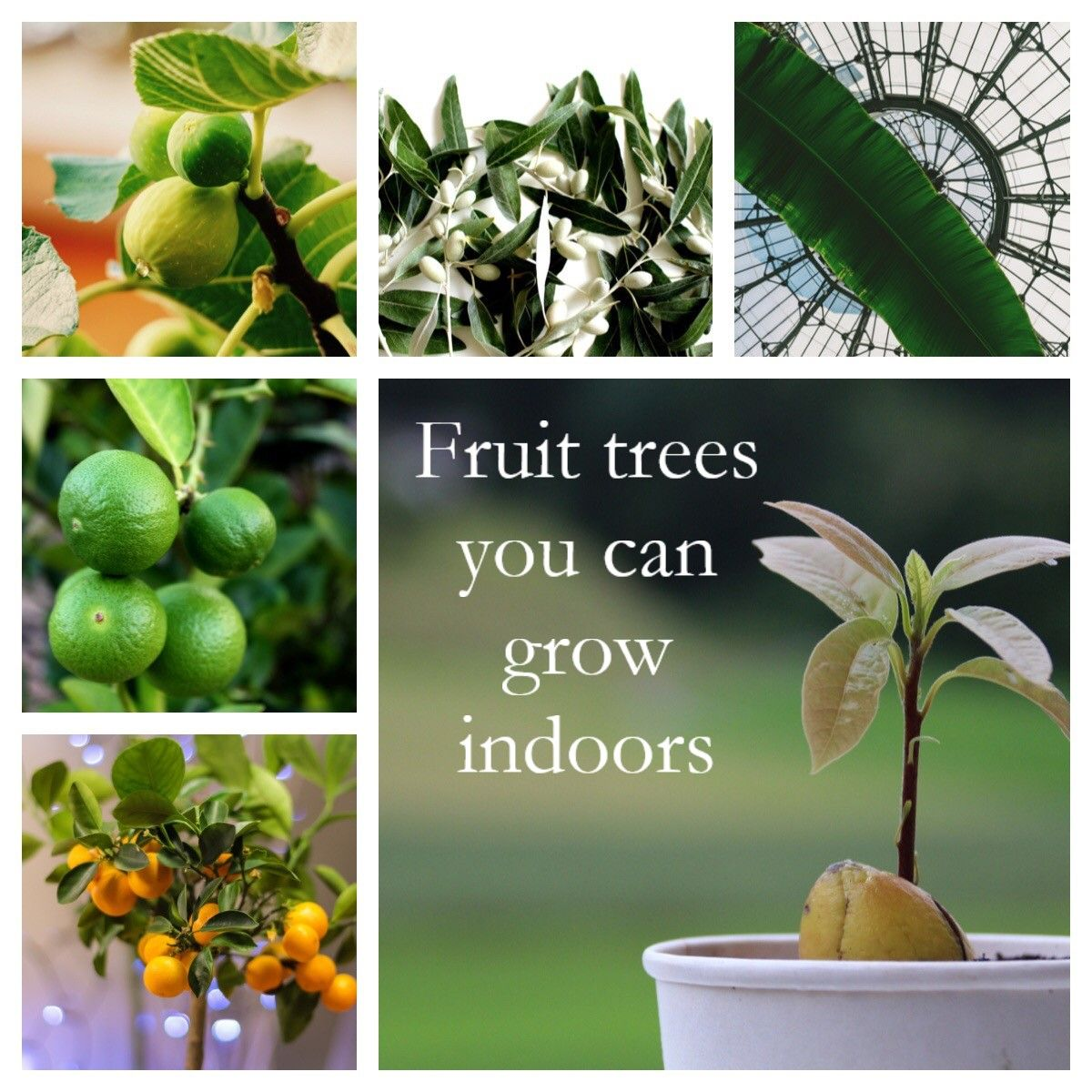Fruit Trees You Can Grow Indoors Right Now Deneweths 400 x 300