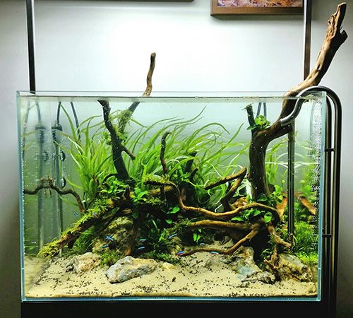 Beautiful Favourites: Tank By Kris WeinholdA Different Substrate Look For This Tank  (pool Filter Sand